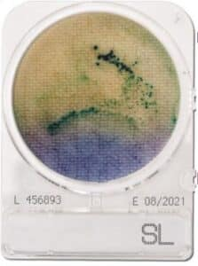 Đĩa kiểm tra nhanh Salmonella SL
